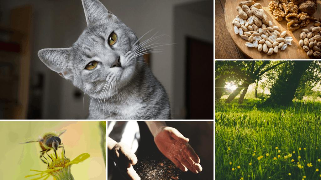 common allergens: cat, nuts, pollen, dust mite, wasp sting